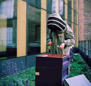 Camilla using a stethoscope to check up on the bees' activity.  These hives are kept  on a hotel's roof top in central London.  Bees are thriving in busy cities due to the lower or no pesticide use and the abundant, exotic and diverse range of flowers, trees and plants available to them.  The hives are checked on a regular basis in the summer to make sure the bees are doing well, check for and treat Varroa and other pests/diseases, to add or remove frames/supers depending on how much honey has been produced, to control the swarming impulse and make sure the queens are doing their job. She will check the hives every 2 weeks from November to February to make sure the bees have enough food and that the queen is laying.
