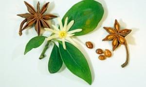 Star Anise (Illicium verum)