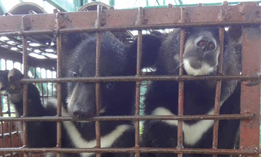 Caged bears in the the Golden Triangle Special Economic Zone, purportedly for eating.