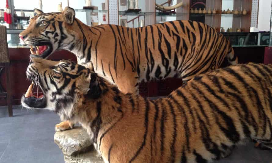 Stuffed tigers for sale at the Golden Triangle Special Economic Zone.