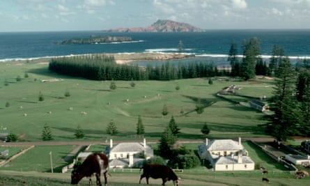 Cattle grazing near the old penal colony on Norfolk Island.