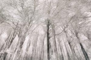 In Cold of Winter Wood - Mike de Sousa The still beauty of a time and place in mid-winter. H 137cm X 91.5cm sublimation heat print on solid aluminium and a platinum white baking enamel