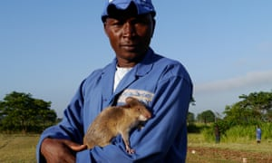 Apopo trainer Miraji Saidi poses with his rat