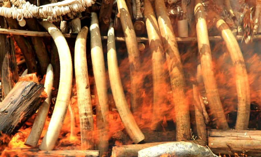Elephant tusks, ivory trinkets and carvings are burned in Addis Ababa to discourage poaching and the illegal ivory trade.