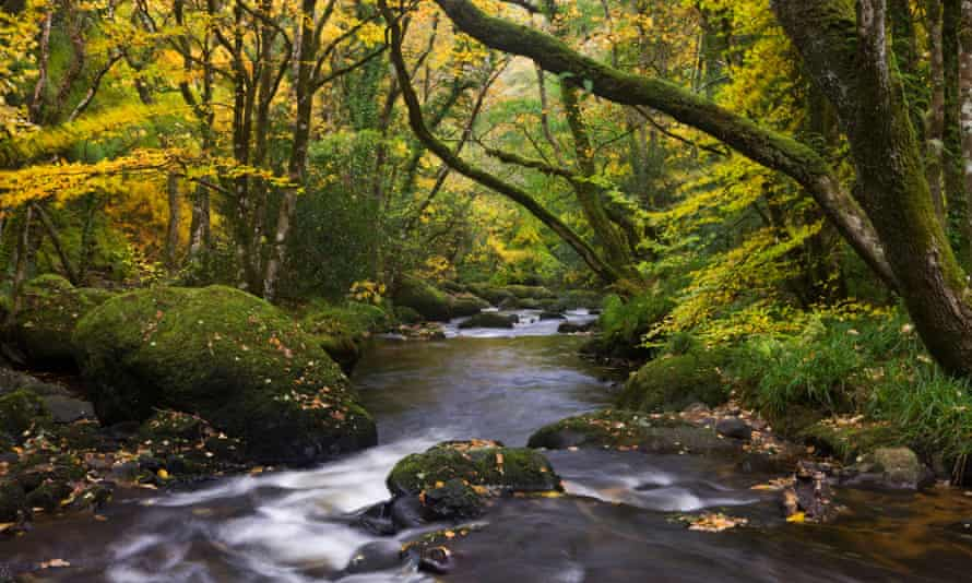The river Teign in Fingle Woods, Dartmoor. The ancient woodland in Devon is one landscape being restored by the National Trust.