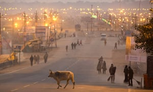 A cow crosses a road in Allahabad, India.