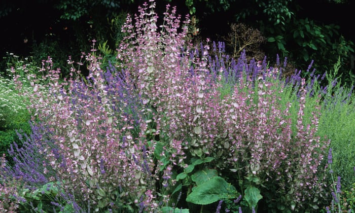 top 10 showstopper plants for borders life and style the guardian