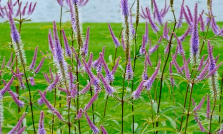 Top 10 Showstopper Plants For Borders Gardens The Guardian
