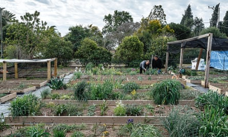 Raised beds in Oron Peri's garden.