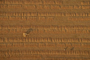 <strong>Gazing down<br></strong>Looking down at a wheat field from a hot-air balloon, in Bagan, Myanmar.