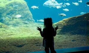 New York Aquarium, Brooklyn, New York.