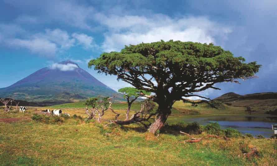 The 2,350-metre Mount Pico.