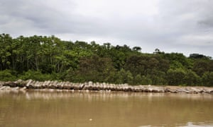 Illegally cut logs