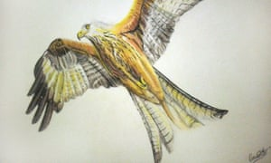 Artwork of a red kite