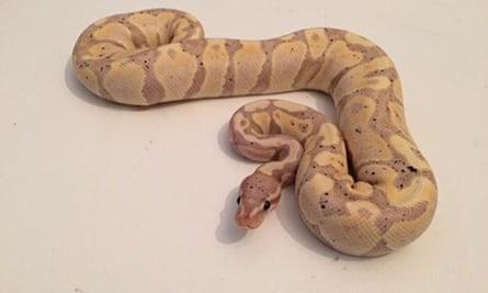 Snakes stolen in St Helens