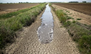 Irrigation water runs along a dried-up ditch between rice farms in Richvale, California.