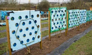 Moulds train trees to grow into hall mirrors at Full Grown in Derbyshire.