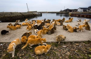 Cats crowd the harbour embankment