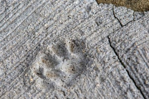 The print of a cat paw is embedded in concrete