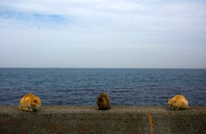 Cats sit on a wall overlooking the sea