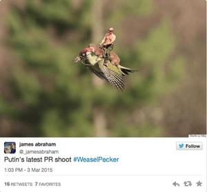 weasel woodpecker