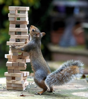 A squirrel gets in on the action.