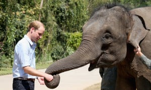 Prince William, Duke of Cambridge meets a rescued elephant called 'Ran Ran' at the Xishuangbanna Elephant Sanctuary on March 4, 2015 in Xishuangbanna, China.