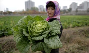 A farmer at the Chilgol vegetable farm on the outskirts of Pyongyang, North Korea.