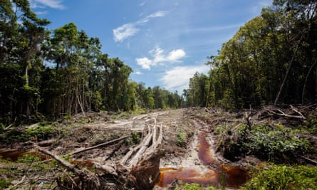 In this photograph taken on September 7, 2013, an access road is constructed in a peatland forest being cleared for a palm oil plantation in Trumon subdistrict, Aceh province, on Indonesia's Sumatra island.