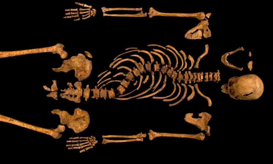 The skeleton of Richard III. The king's remains will be reburied at Leicester cathedral this month.