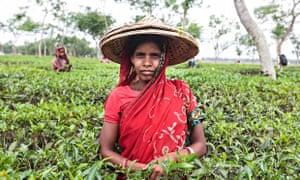 A Bengali tea labourer