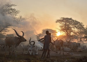 Boys lead a prized bull from a cattle camp in South Sudan