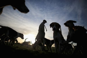 The hounds of the Atherstone Hunt are exercised before heading out