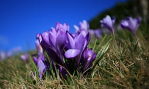 Nature Lovers On Lookout For Spring As Warm Weather Arrives In Uk