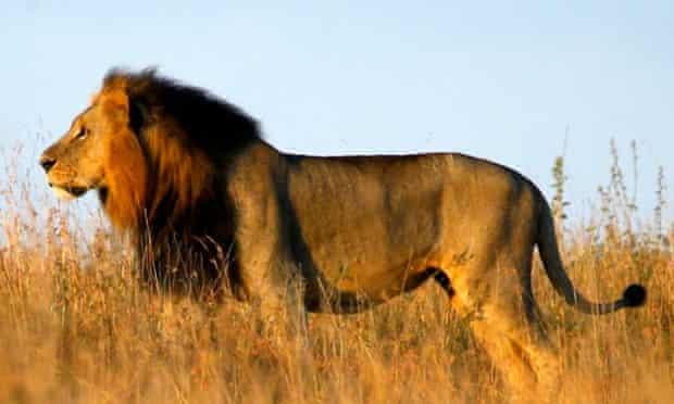 Lions in Nairobi