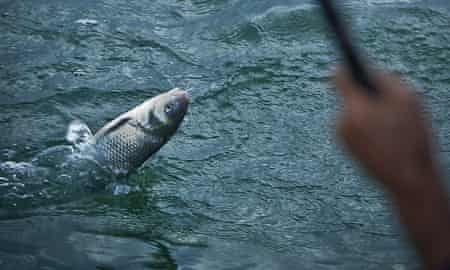 """Pollution and over fishing have dwindled the supply of fish in the the Caspian Sea. <a href=""""https://www.flickr.com/photos/maysam-pix/6186130922/"""">Photograph: Maysam Pourghasemi/flickr</a>"""