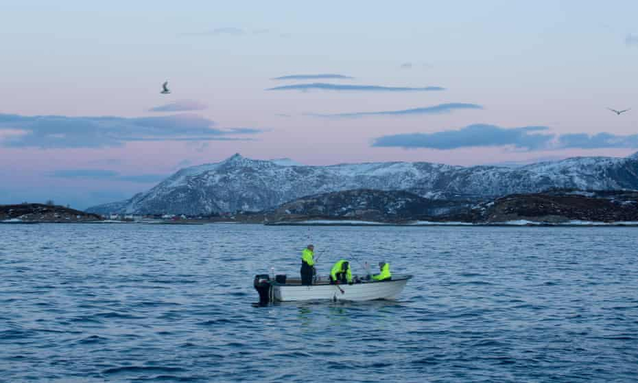Cod fishing off the coast of Norway, in the Arctic circle