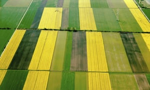 Corn and rape fields in Bavaria, Germany