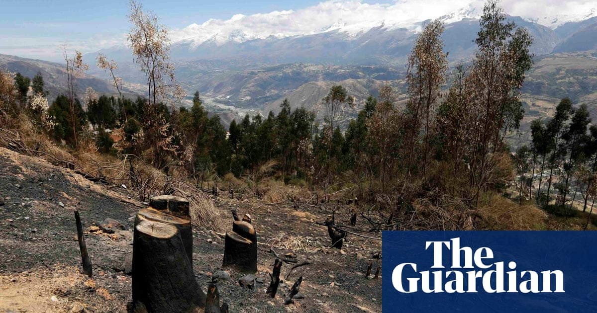 Google powered map helps fight deforestation guardian sustainable google powered map helps fight deforestation guardian sustainable business the guardian gumiabroncs Choice Image