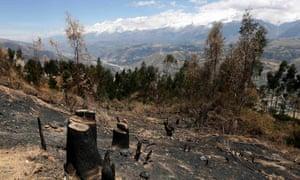 deforestation in Ancash