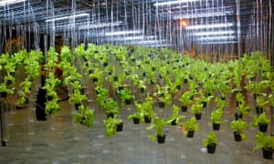 Growing food using indoor lighting can have significantly higher environmental costs