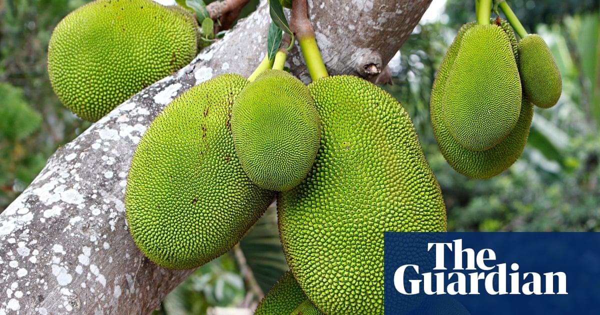 Green Jackfruit Is Pulled Pork For Vegetarians The Next Big Food