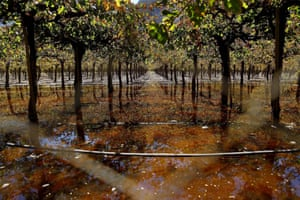 In another photograph from Los Loros by Ivan Alvarado, a vineyard is covered by waste water from sewers damaged in the flooding