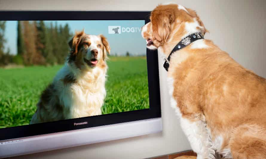 """DogTV has """"millions, maybe tens of millions"""" of viewers."""
