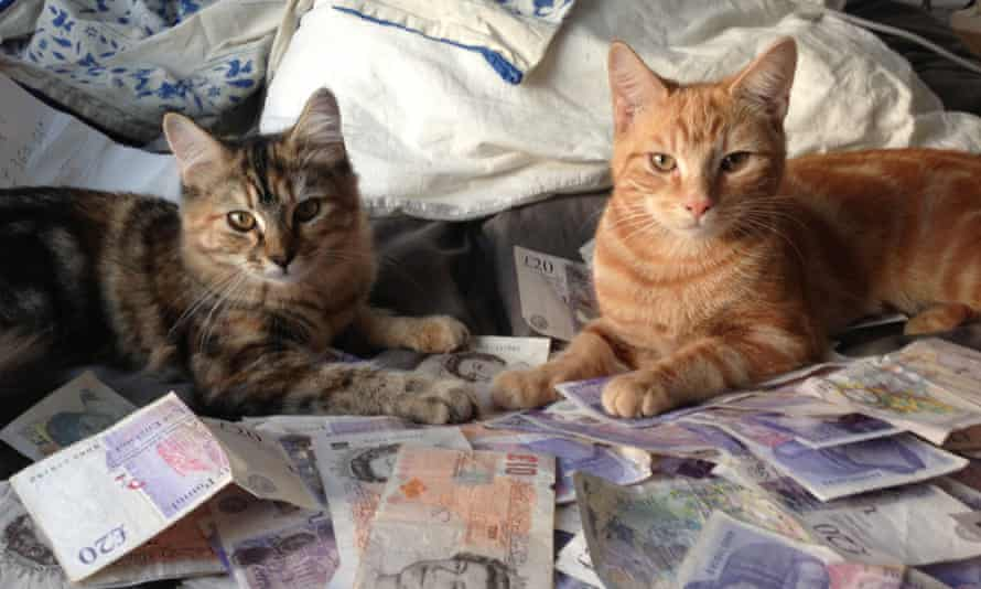 Cats on cash