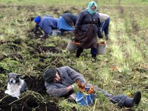 Belarussian harvest