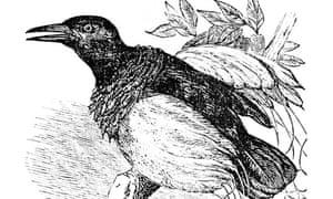 """""""bird singing"""""""