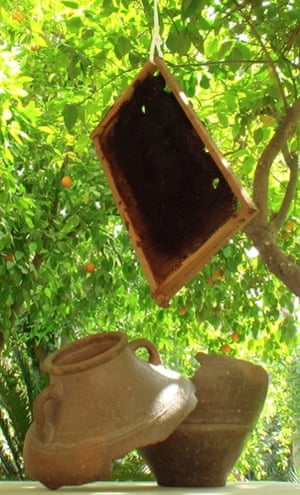 Furat al-Jamil's honeypot installation hanging in a tree
