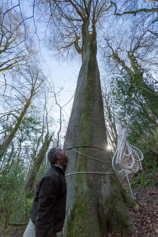 Beech tree standing 144 feet (44 metres) high has been declared the tallest native tree in Britain