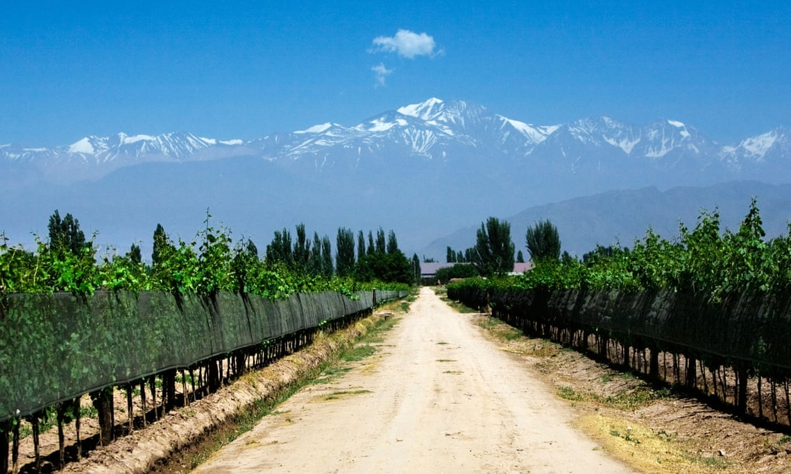 Most Mendoza vineyards have the benefit of the Andes as a backdrop.